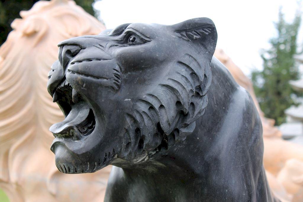 Schwarze Tiger